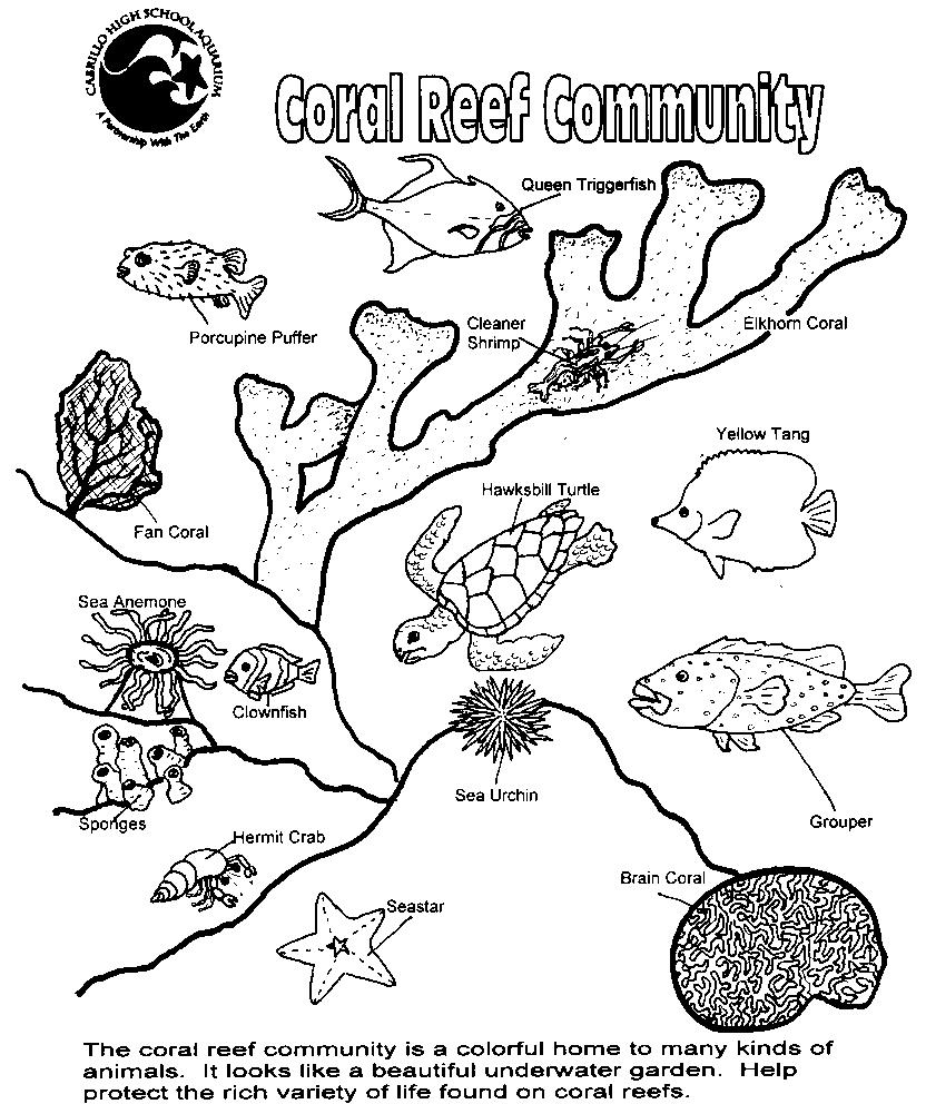 coral reef coloring book pages - photo#11