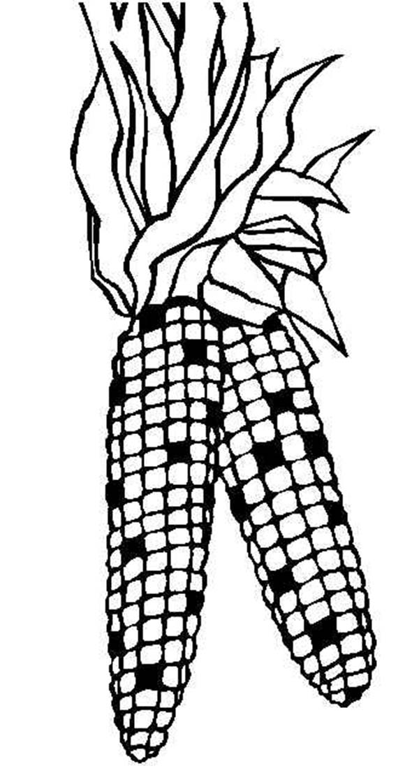 Indian Corn Coloring Page - Coloring Home
