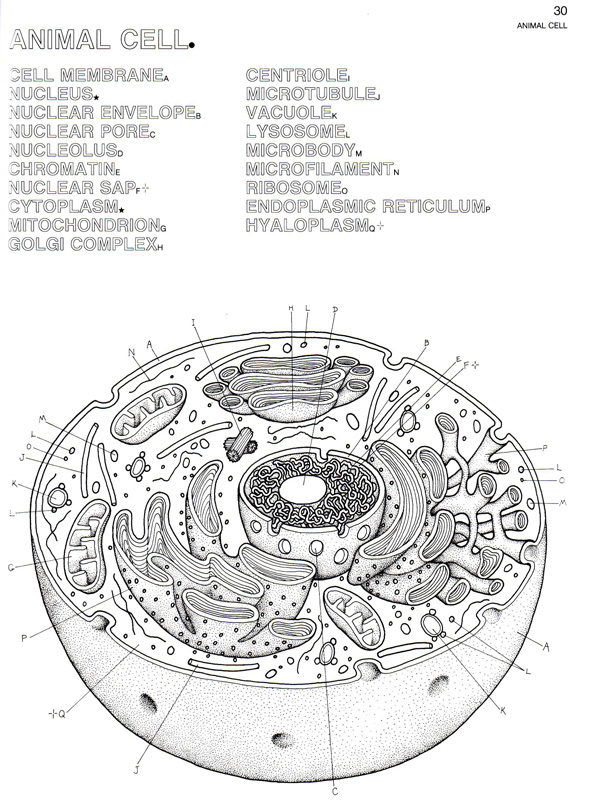 eukaryotic animal cell coloring pages - photo#17