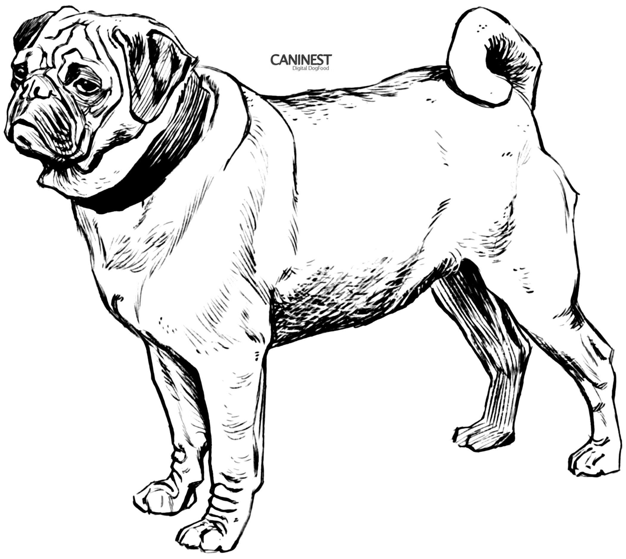pug puppy coloring page coloring home