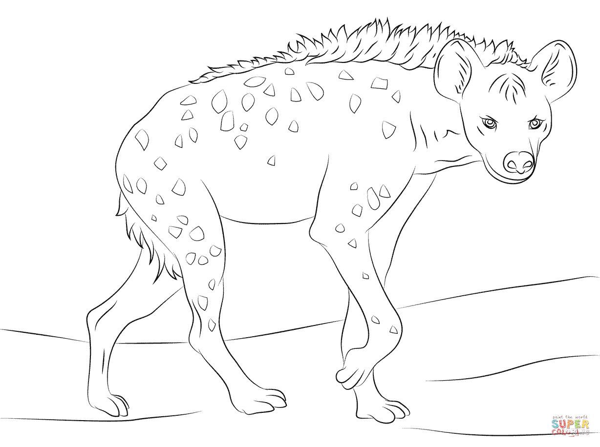 Spotted Hyena coloring page | Free Printable Coloring Pages