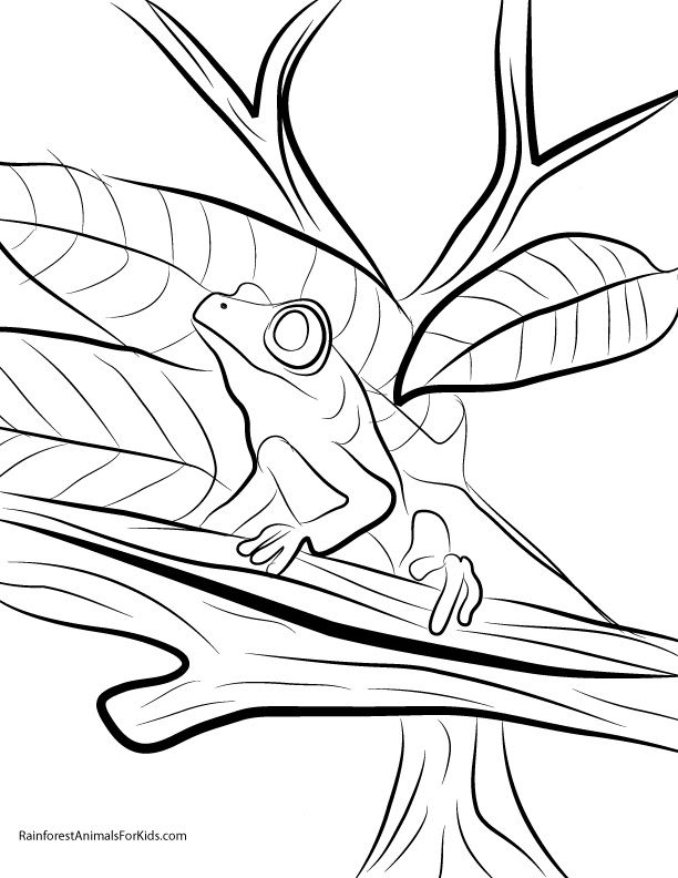 Rain Forest Animals Coloring Pages