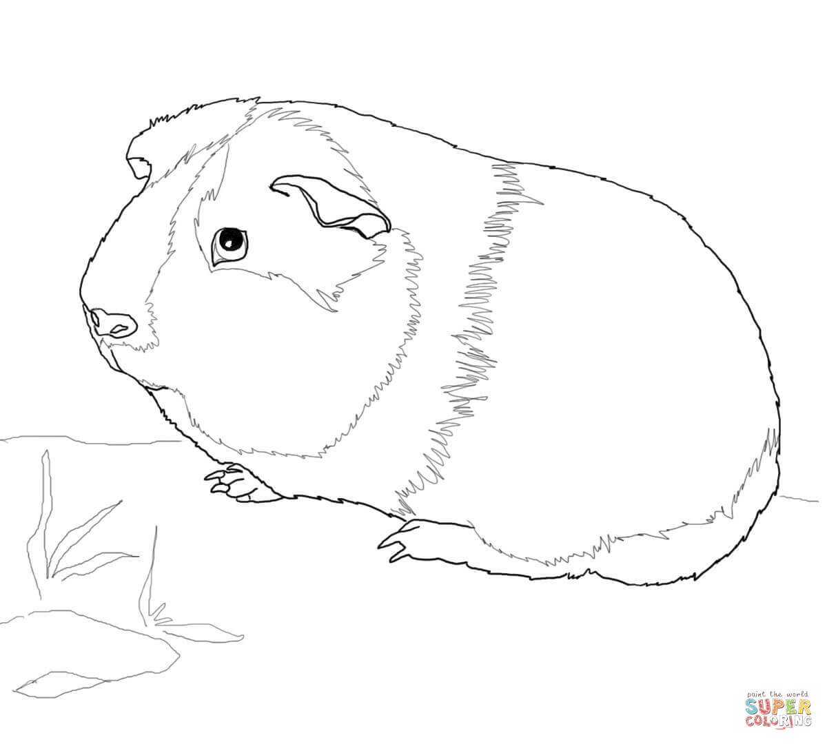 Guinea Pig Coloring Pages  Free Coloring Pages  Coloring Home