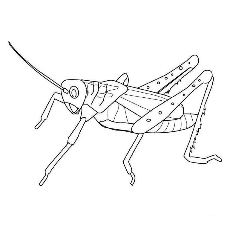 Bug & Insect Coloring Pages