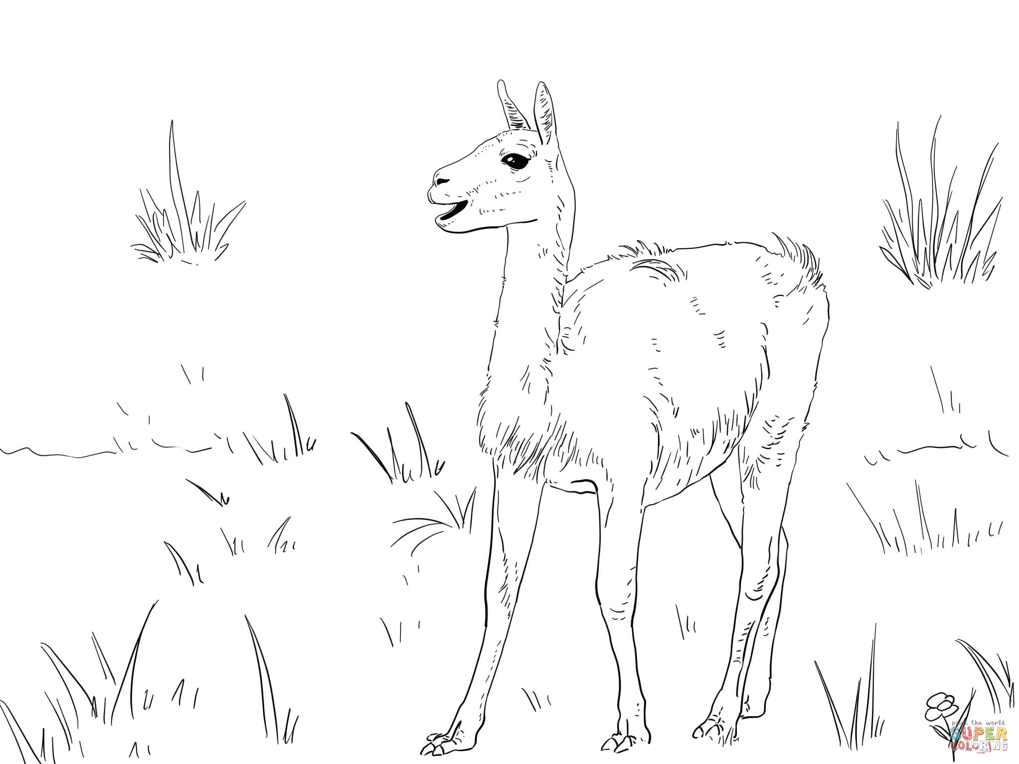 Guanaco South America Camelid coloring page | Free Printable ...