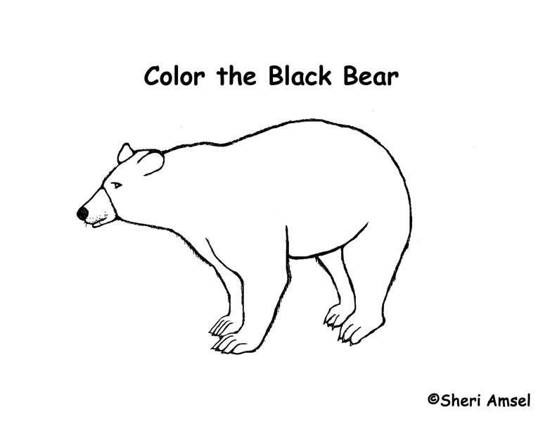 American Black Bear Coloring Page - Coloring Home