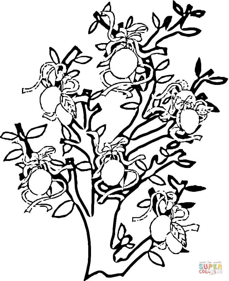 Printable Zacchaeus Coloring Page : Orange tree coloring page pages ideas