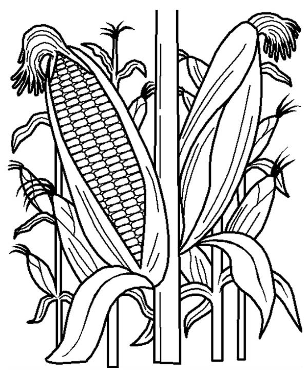 corn stalks coloring pages - photo#2