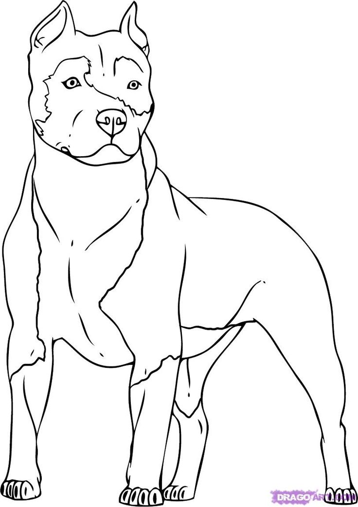 Coloring Pages Of a Pitbull