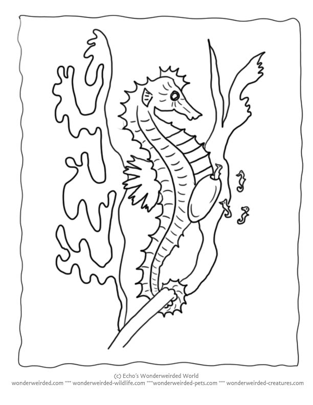 seahorse coloring pages for kids az coloring pages