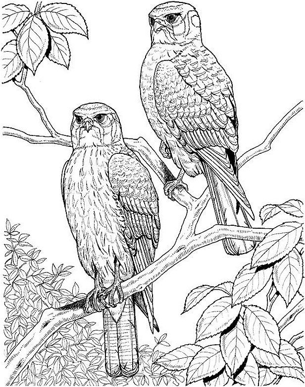 Owl Adult Coloring Pages - Coloring Pages