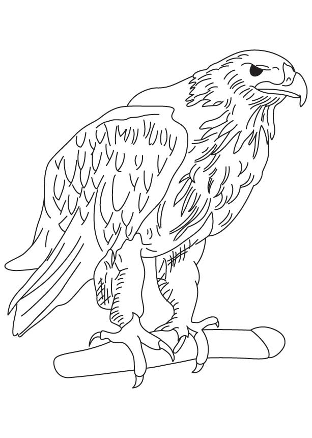Golden eagle coloring page | Download Free Golden eagle coloring