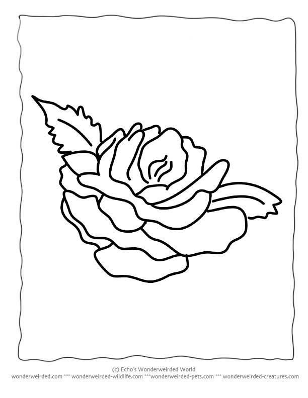 Pics Of Cartoon Flowers