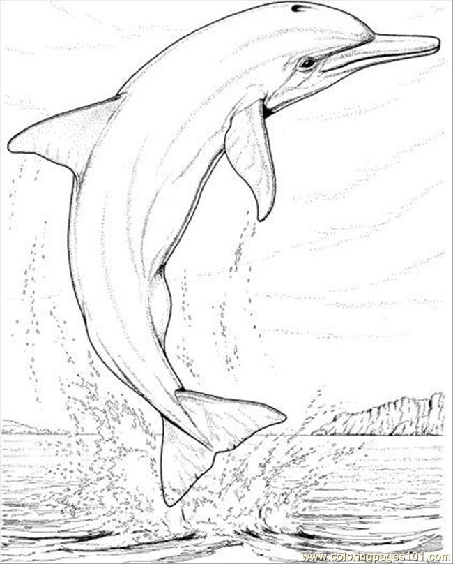 Coloring Pages Dolphin Jump Coloring