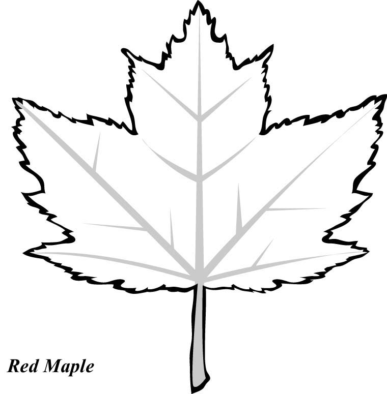 Maple Leaf Coloring Pages Coloring Home Maple Leaf Coloring