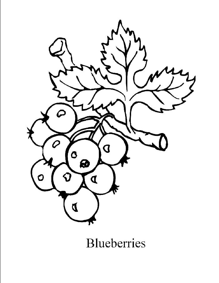 blueberrys Colouring Pages