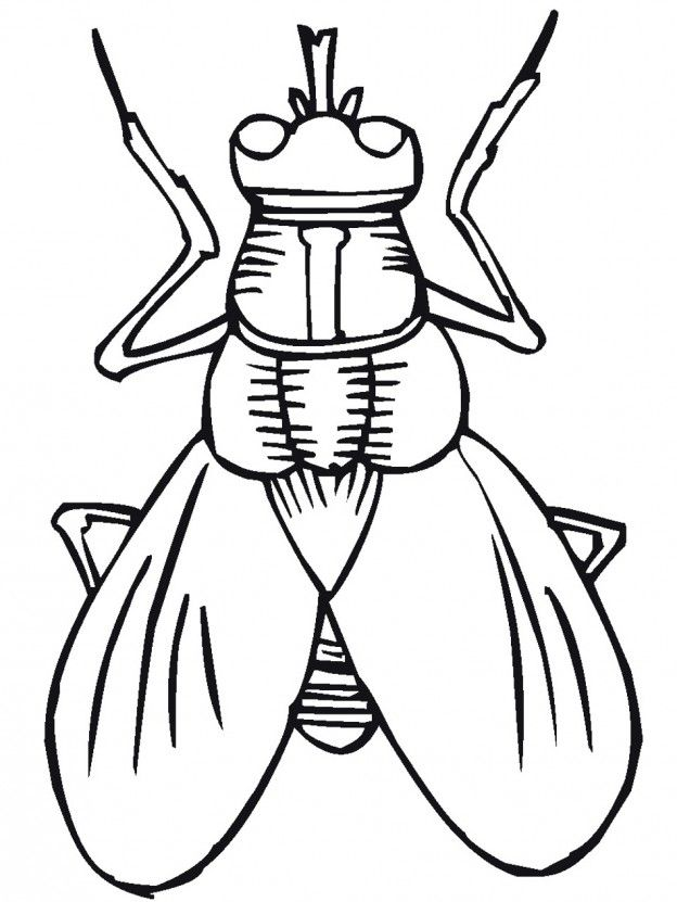 Lightning Bug Coloring Pages