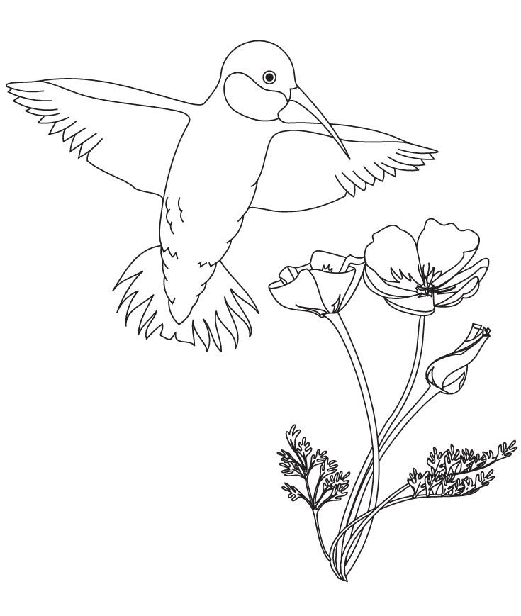 hummingbird with flower coloring pages download free