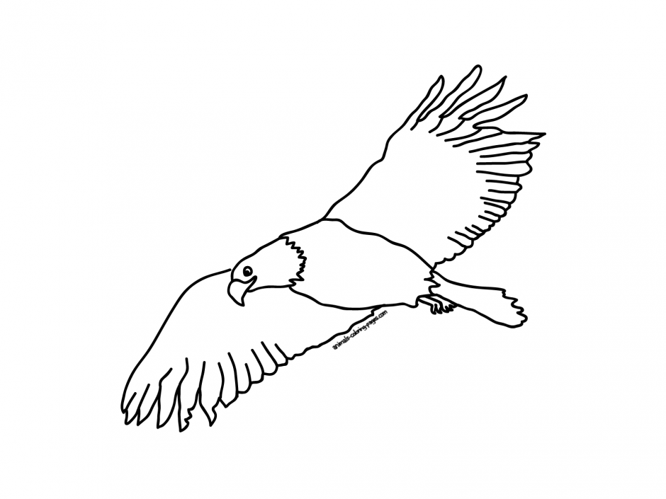 eagle coloring pages bird - photo #50