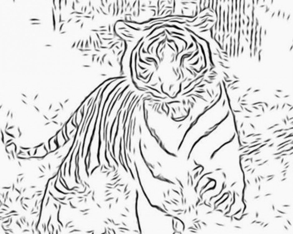 coloring pages wildcats - photo#27