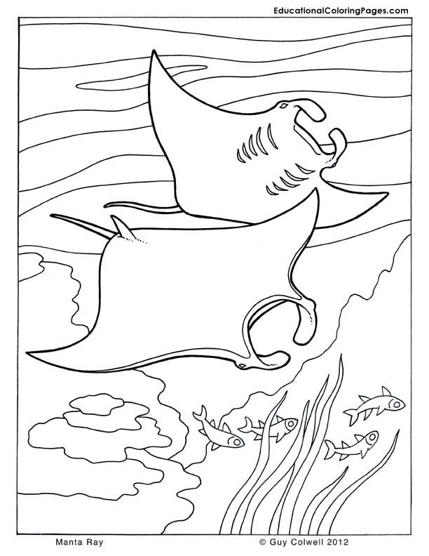 Free Coloring Pages Ray : X ray coloring pages for kids az