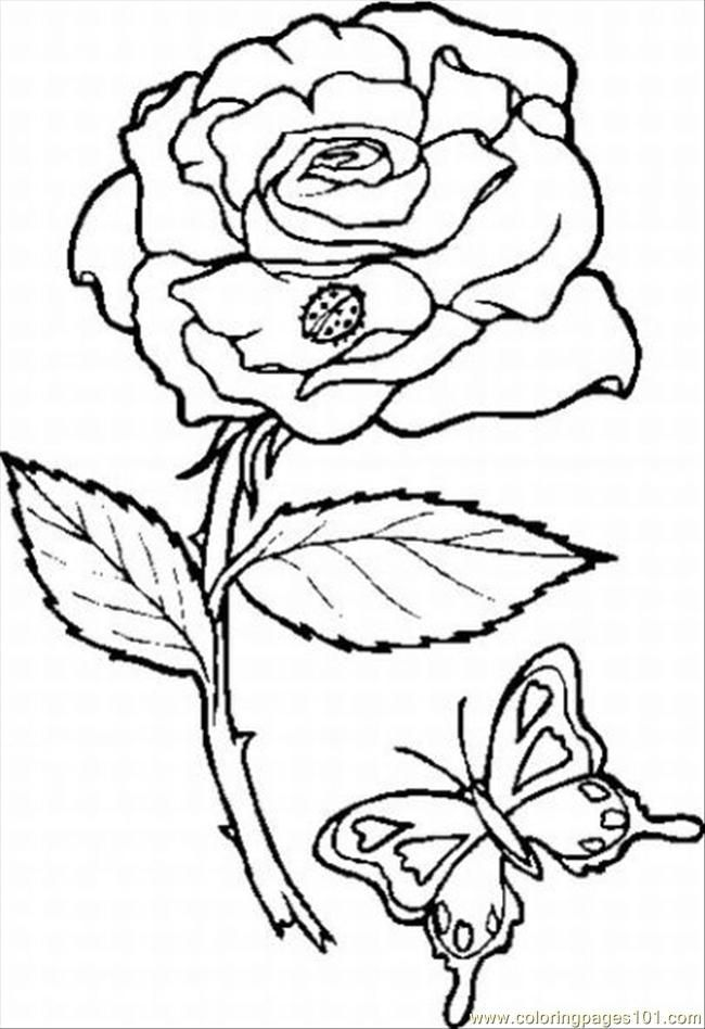 Coloring Pages Rose 10 Lrg (Natural World > Flowers) - free