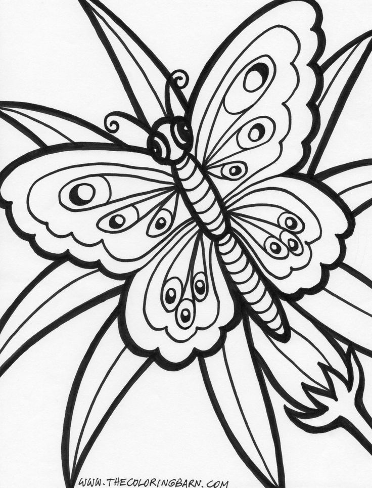 coloring pages painted lady butterfly - photo#27