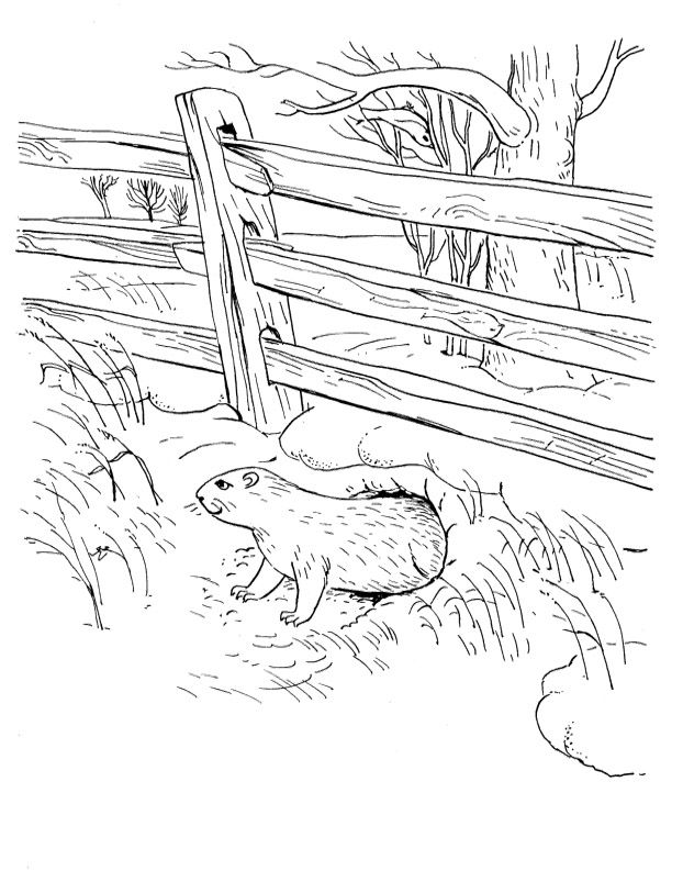 Pictures Groundhog In Garden Coloring Pages