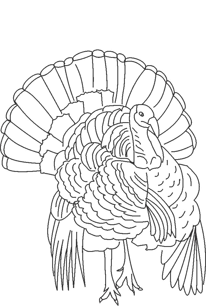 wild turkey coloring pages az coloring pages