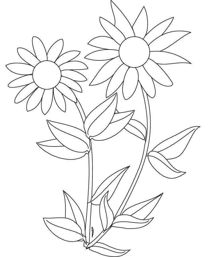 Sunflower coloring pictures coloring home for Free sunflower coloring pages