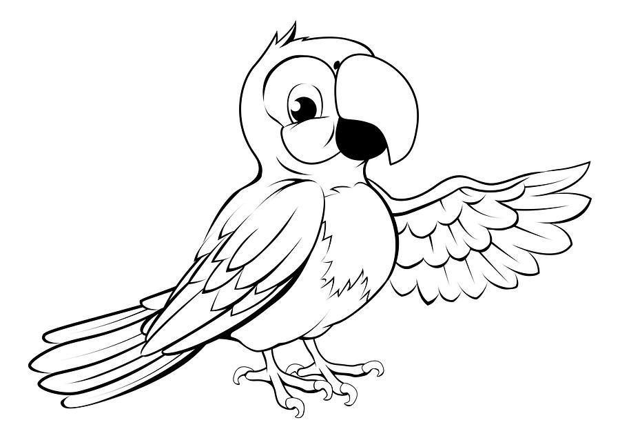 Рисунки попугая чёрный белый