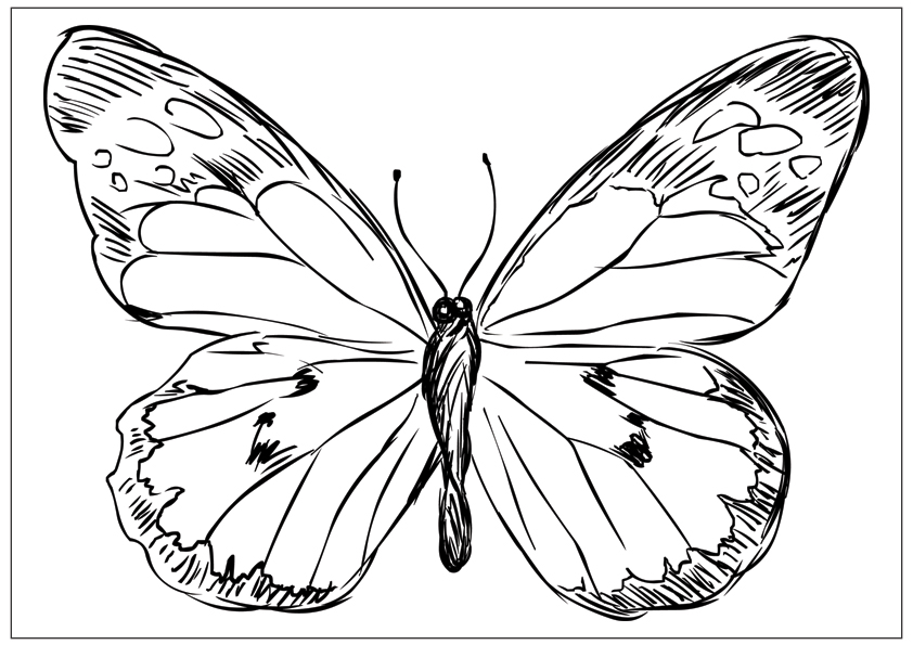 Butterfly designs to color - photo#20