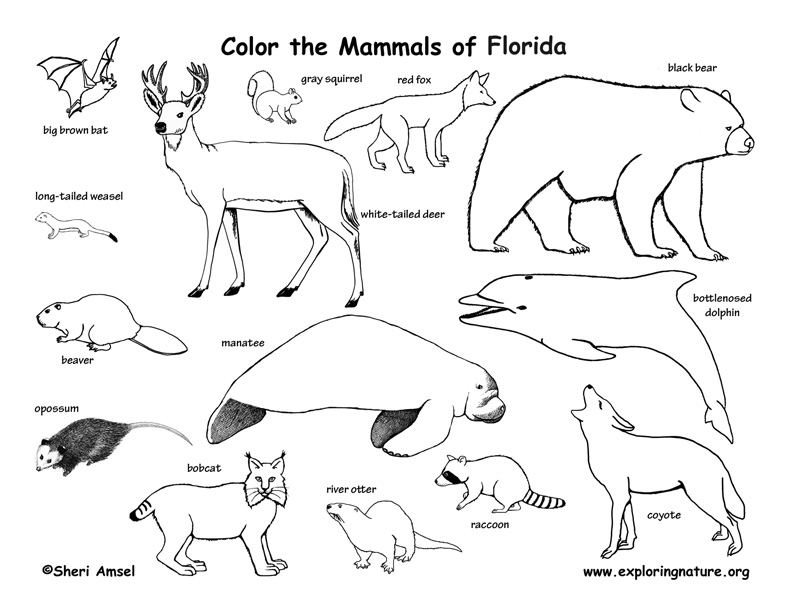 Mammal Pictures To Print AZ Coloring
