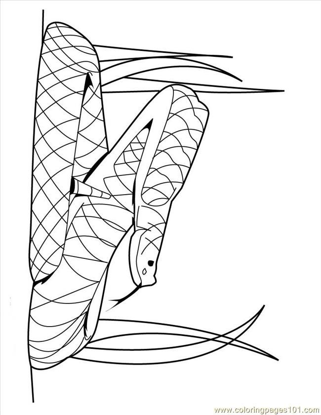 free reptile coloring pages - photo#22
