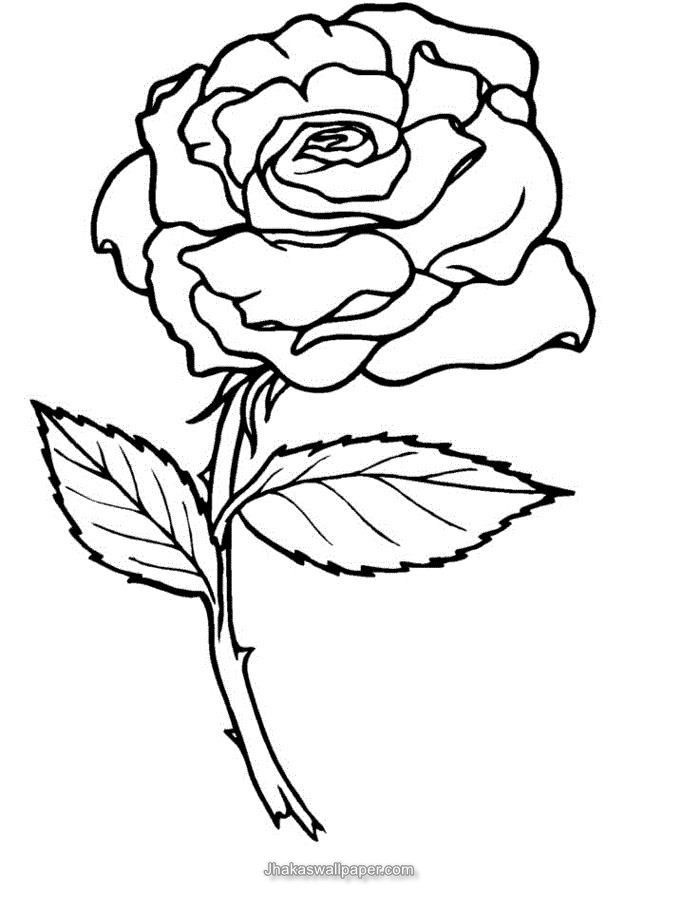 coloring pages of roses coloring home
