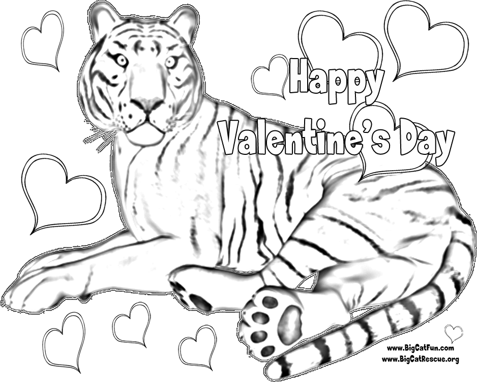 tiger pictures for kids coloring home