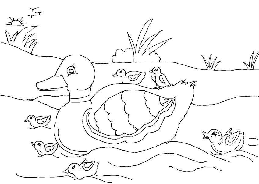 realistic duckling coloring pages - photo#13