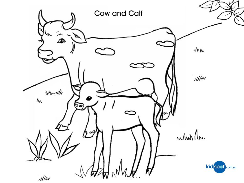 Cow Coloring Page Coloring Home