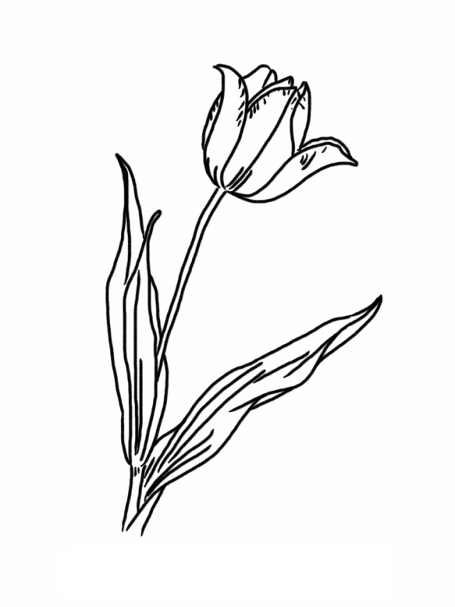 free printable tulip coloring pages - tulip pictures to print coloring home