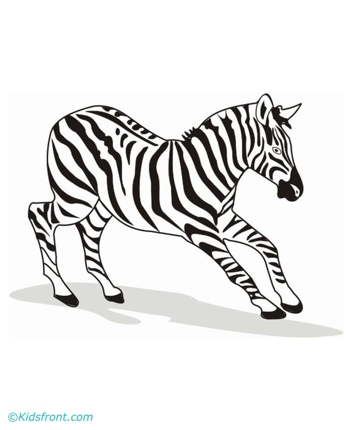 zebra coloring pages without stripes - photo #46