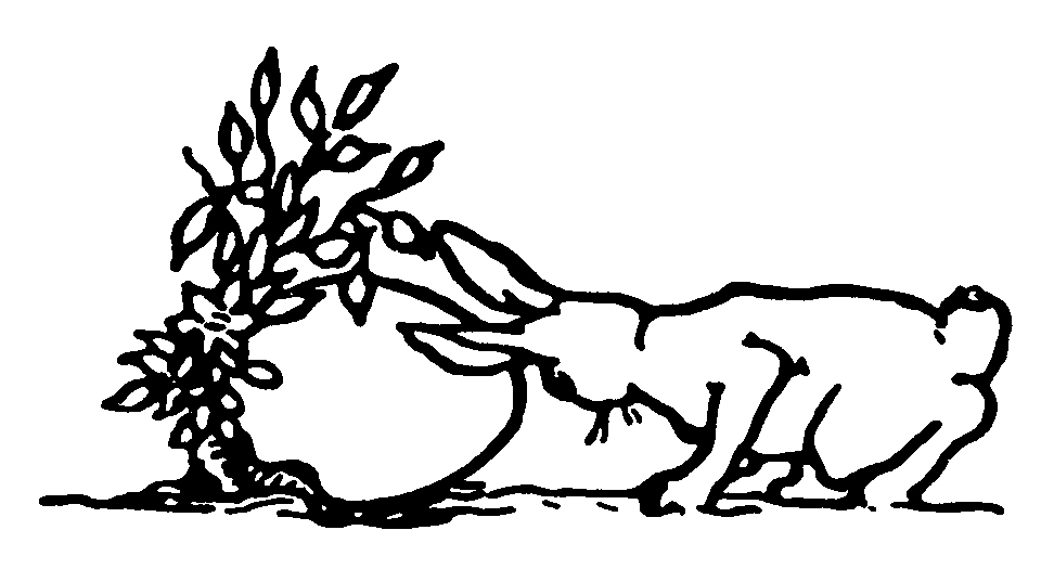 Line Drawing Bunny : Drawings of bunnies az coloring pages