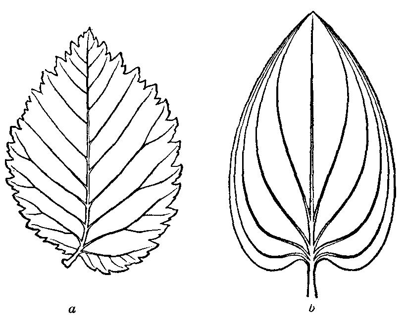 Traceable Leaf Patterns Coloring