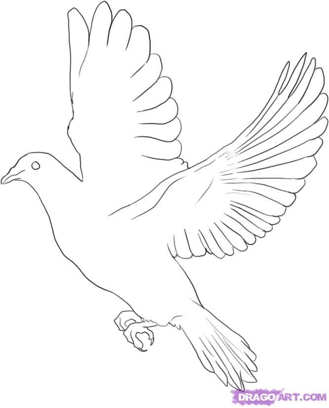 White Doves Drawings Flying Dove Drawing How to
