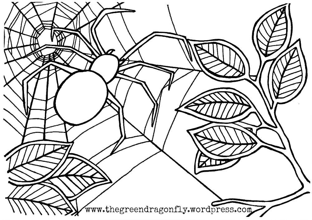 free spider web coloring pages - photo#30