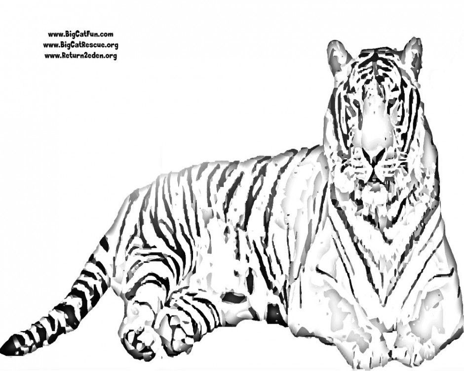 tiger outline az coloring pages