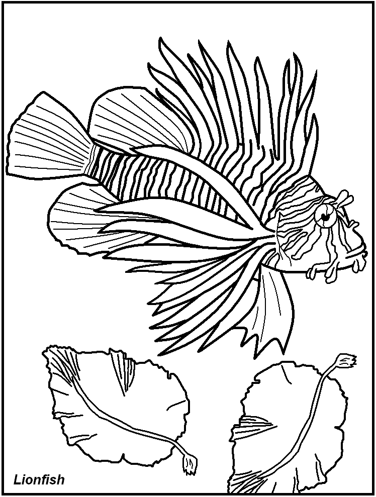 Of Fish For Adults Colouring Pages Az Coloring Pages