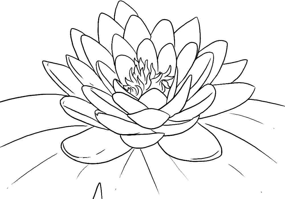 Lotus Flower Coloring Page AZ Coloring Pages