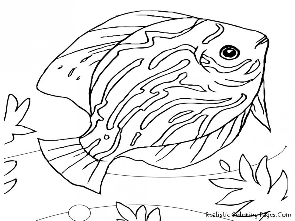Rainbow fish template az coloring pages for Rainbow fish coloring pages
