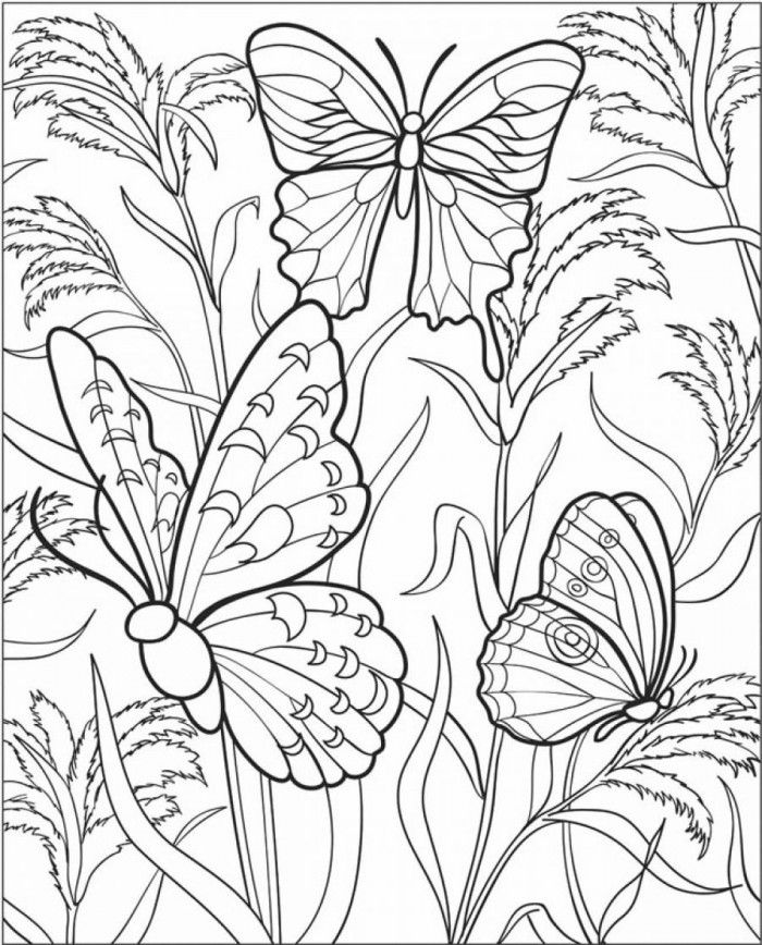 Difficult Butterfly Coloring Pages | 99coloring.com