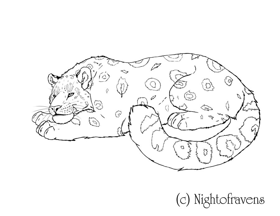 free snow leopard coloring pages - photo#22